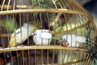 L'oiseau et la cage