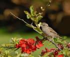 L'oiseau qui aimait les fleurs ...