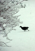 L'oiseau sur la neige fraîche