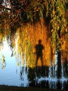 L'ombre du lac