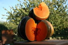 L'orange de l'automne