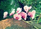 L'Orchidée