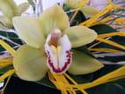 L'orchidée la fleur des îles