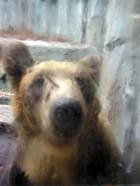 L'ours qui a vu l'homme