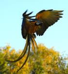 L'ouverture du perroquet