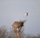 l retour au nid