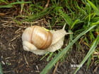 La balade de l'escargot