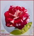 La beauté d'une rose Julio Iglésias