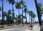 La belle avenue de Tamatave