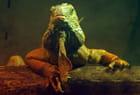 La bête préhistorique