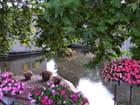 La bèze et ses fleurs
