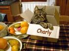 La boîte à Charly