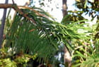 la branche