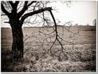 La branche cassée