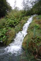 la cascade dans les herbes