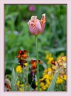la fleur fanée