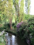 La floraison des rhododendrons se termine