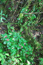 La flore d'Iguazu