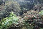 la flore de l'île de Madère
