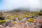 la flore sur les flancs du volcan