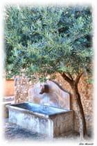 La fontaine et l'oliver