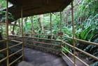 la forêt d'Okinawa