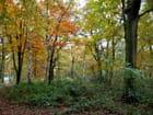 La forêt de Montgeon en automne