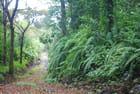 la forêt du sud est de La Réunion