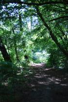 la forêt en juin