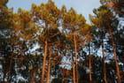 la forêt illuminée