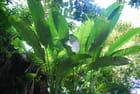 la forêt tropicale humide de l'île de la Dominique