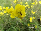 La fourmi et sa fleur