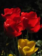 La jaune et les rouges