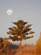 La lune pleine