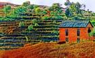 La maison dans la rizière