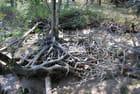 la mangrove girondine