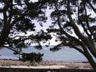 La mer à travers les branches