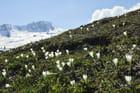 La montagne au printemps
