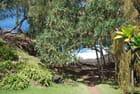 la nature au Cap Méchant