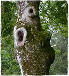 La nature fait parfois une drôle de tête !
