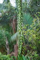 la nature Réunionnaise