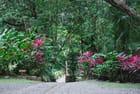 la nature tropicale