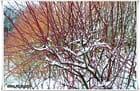 La Neige 2012 est arrivée ... 02