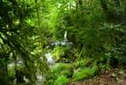 La Petite Amazonie