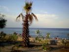 La plage d'Argelès - 1