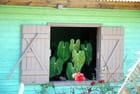 la plante à la fenêtre