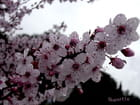 La pluie et les fleurs
