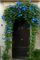 La porte au liseron