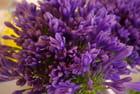 La Provence dans toute sa splendeur