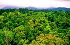 La Rainforest près de Cairns